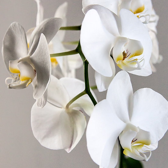 From the garden: Poker di orchidee 1, 2, 3, 4 | Gianni Maffi