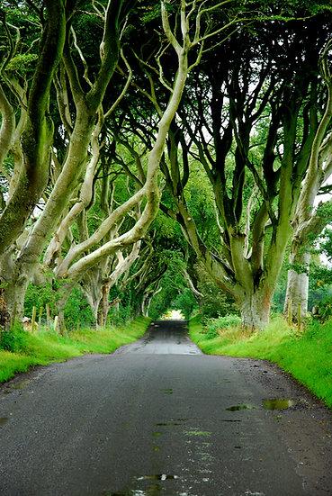 Irlanda | Luca Cortese