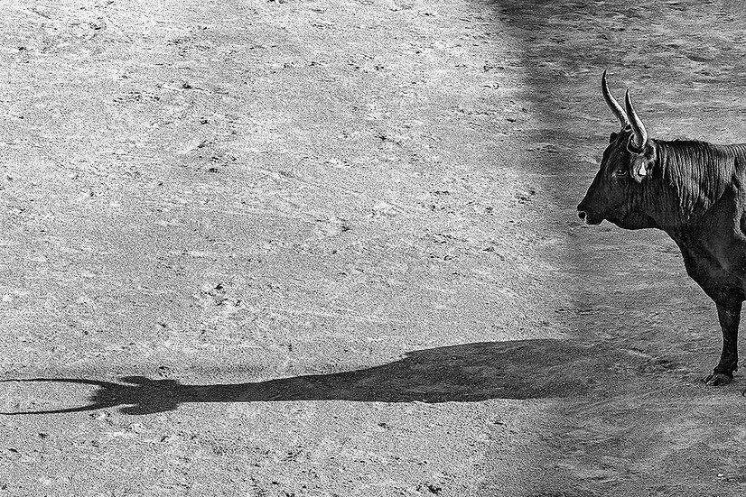 L'ombra | Gianni Maffi