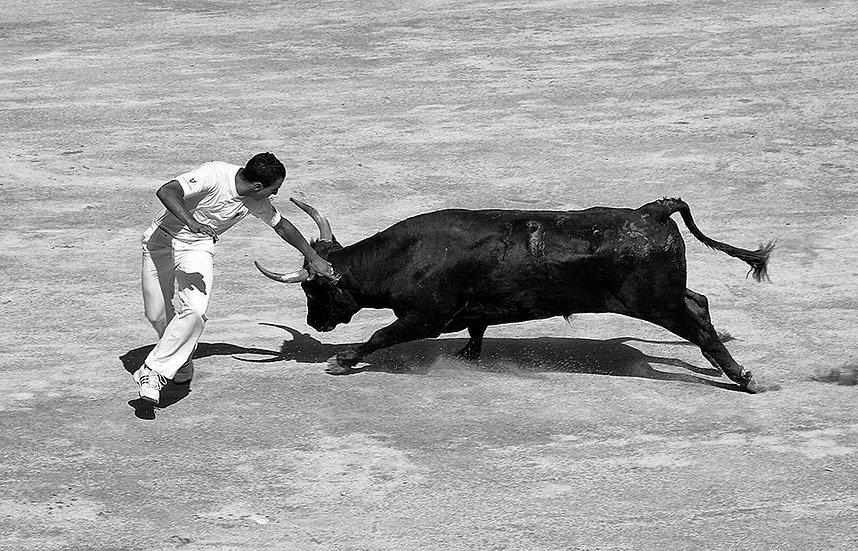 Tori ad Arles 3 | Gianni Maffi