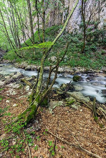 In foresta 3 | Gianni Maffi