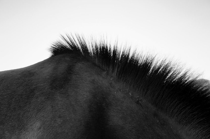 Horse 3 | Daniele Vita