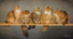 2018_04_alla 5 katter, 9.jpg