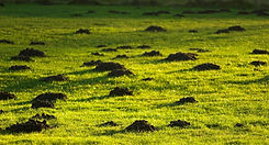 Mole Hills Preston
