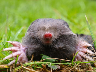 How to catch a mole?