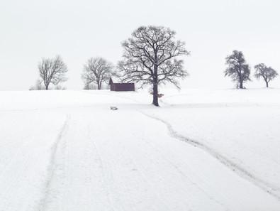 Apprécier les joies de l'hiver . Ou pas!