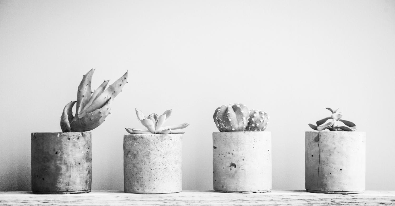 Succulents In Diy Concrete Pot. Scandinavian Room Interior Decoration_edited_edited