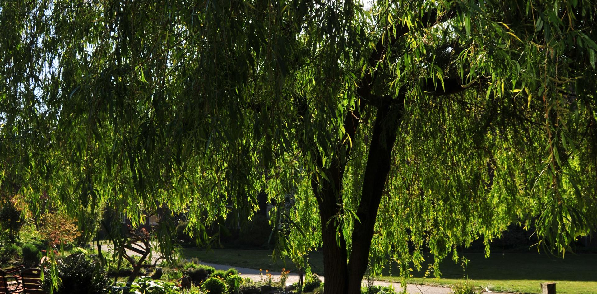 Bomen op het middenplein van Landgoed de Leonardushoeve