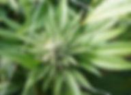 philly.com2.jpg