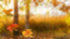 Autumn leaves_119411517_M.jpg