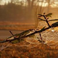 Welcoming Fall Wellness
