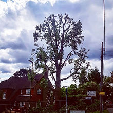 Tree surgery sussex landsapers sussex limitless landscapes tree reduction tree care