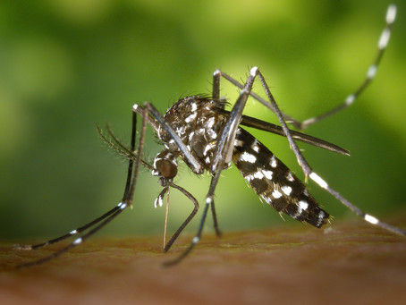 Dengue: how to explain the manifestation of severe forms?