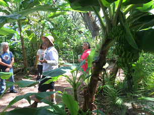 Growing Fruit In Florida: Beyond the Citrus