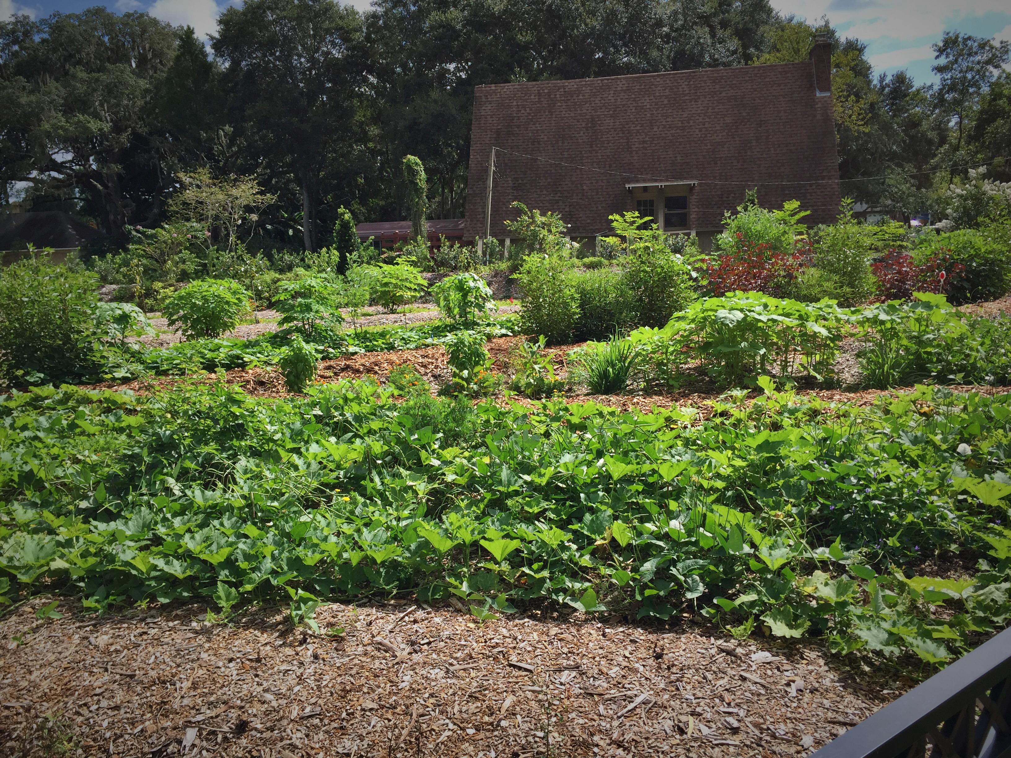 Edible Forest Garden Tampa Bay