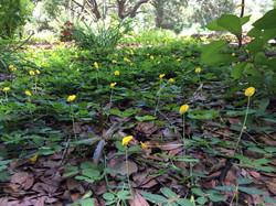 Florida Friendly Landscapes Tampa