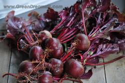 Grow Organic Tampa Bay