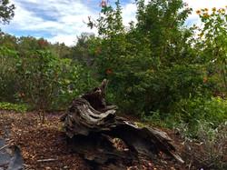 Native Landscape Design Tampa Ba