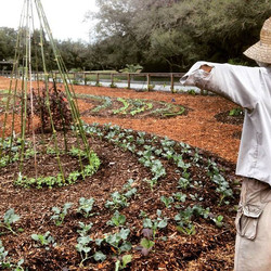 Organic Farming Tampa Bay