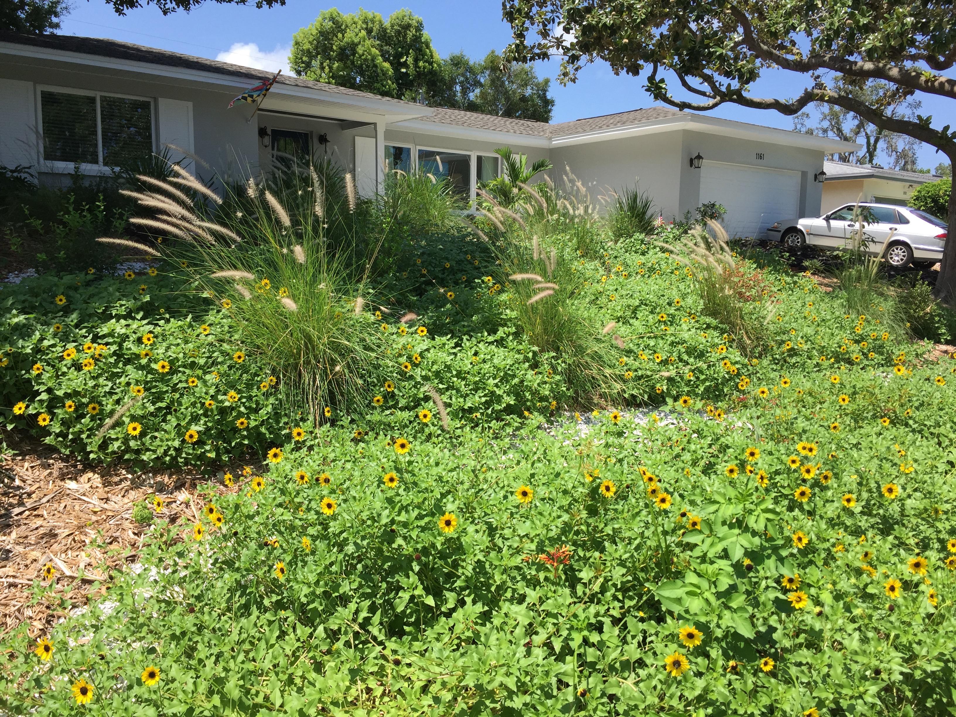 Native Landscape Design Tampa Bay