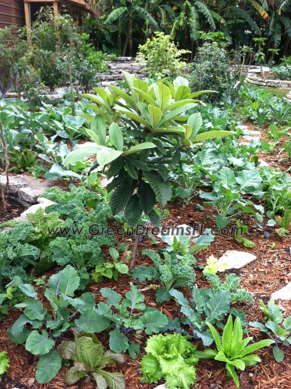 Edible Landscaping Florida