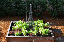 Grow Your Own Tampa Bay