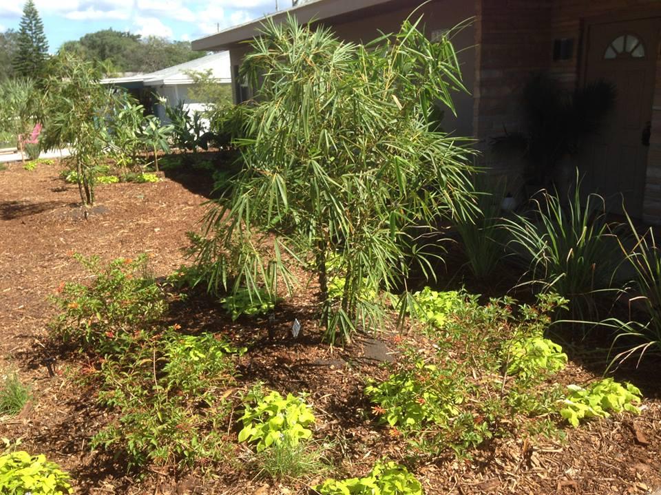 Ecological Landscape Design Florida