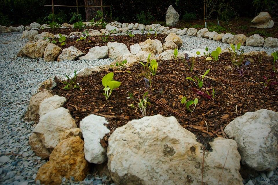Grow Your Own Greens Tampa Bay