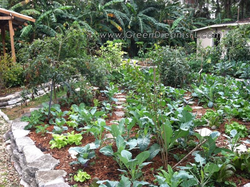 organic garden consultations tampa bay