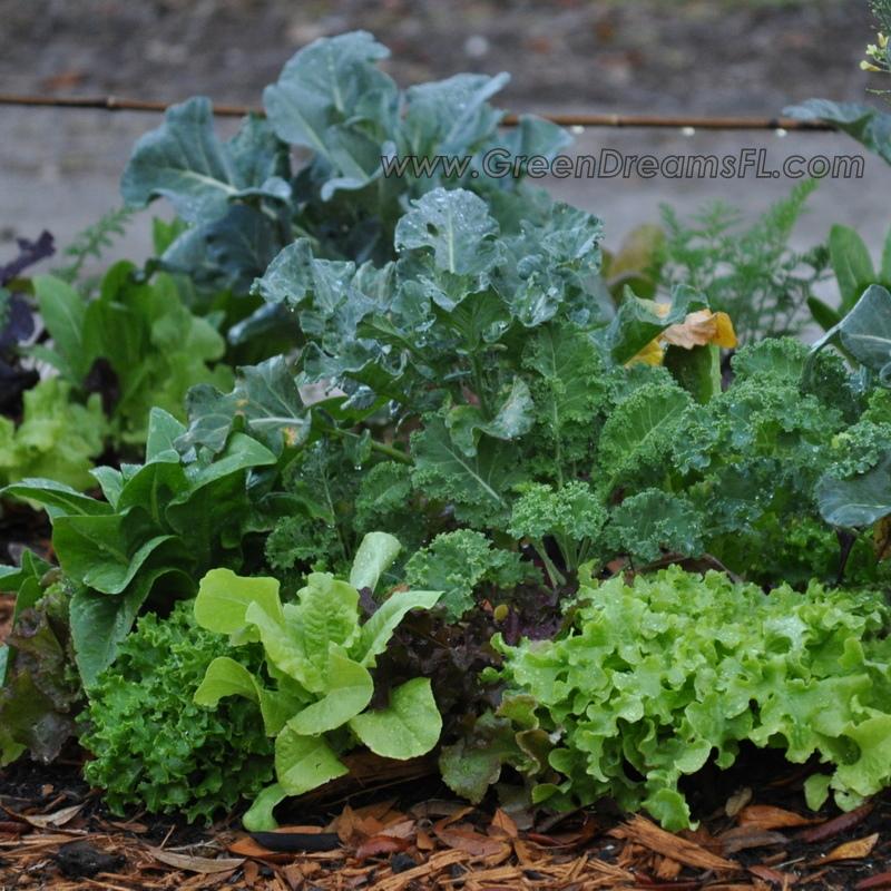 Organic Vegetable Gardens Tampa Bay