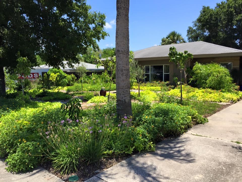 Food Forest Design Tampa Bay