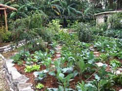 Edible Landscaping Tampa Bay