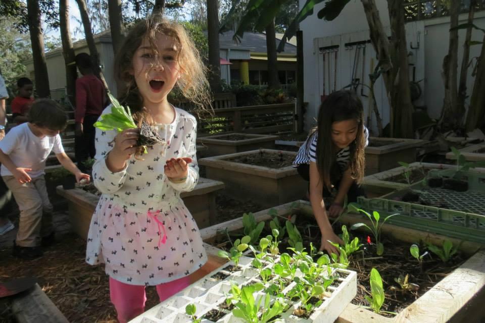 Organic School Gardens Tampa Bay