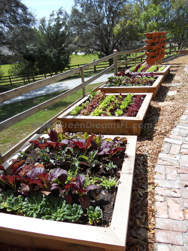 Organic Vegetable Garden Tampa Bay