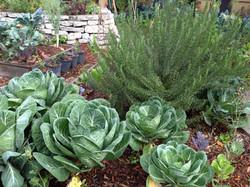 Edible Landscape Design Florida