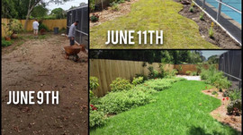 Rapid Growth + Grassy Patches