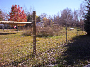 6-1/2' Tall Game Fence