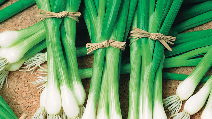 Spring Onions Large Bunch