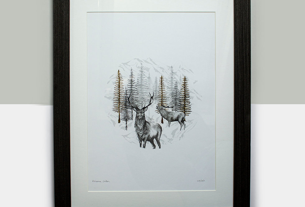 Highland Deer Limited Edition Mounted Print
