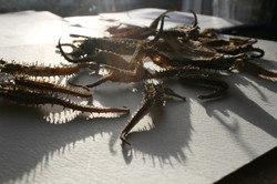 Critters in the sun