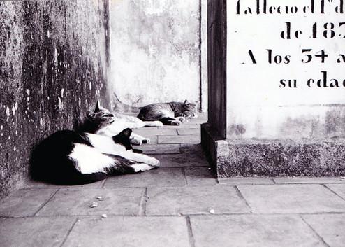 Photography: Argentina