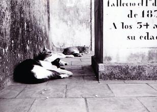 Argentina © Andrea Oakes