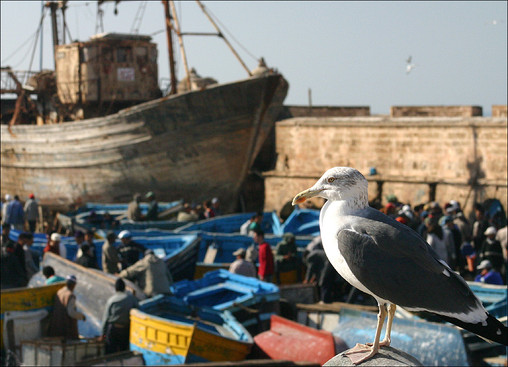 Essaouira, Morocco © Andrea Oakes