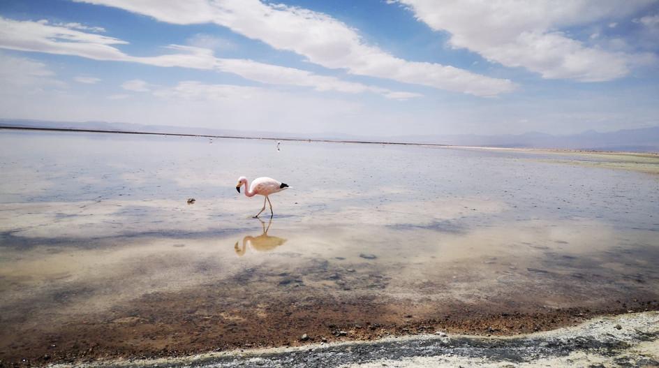 Lagune Chaxa