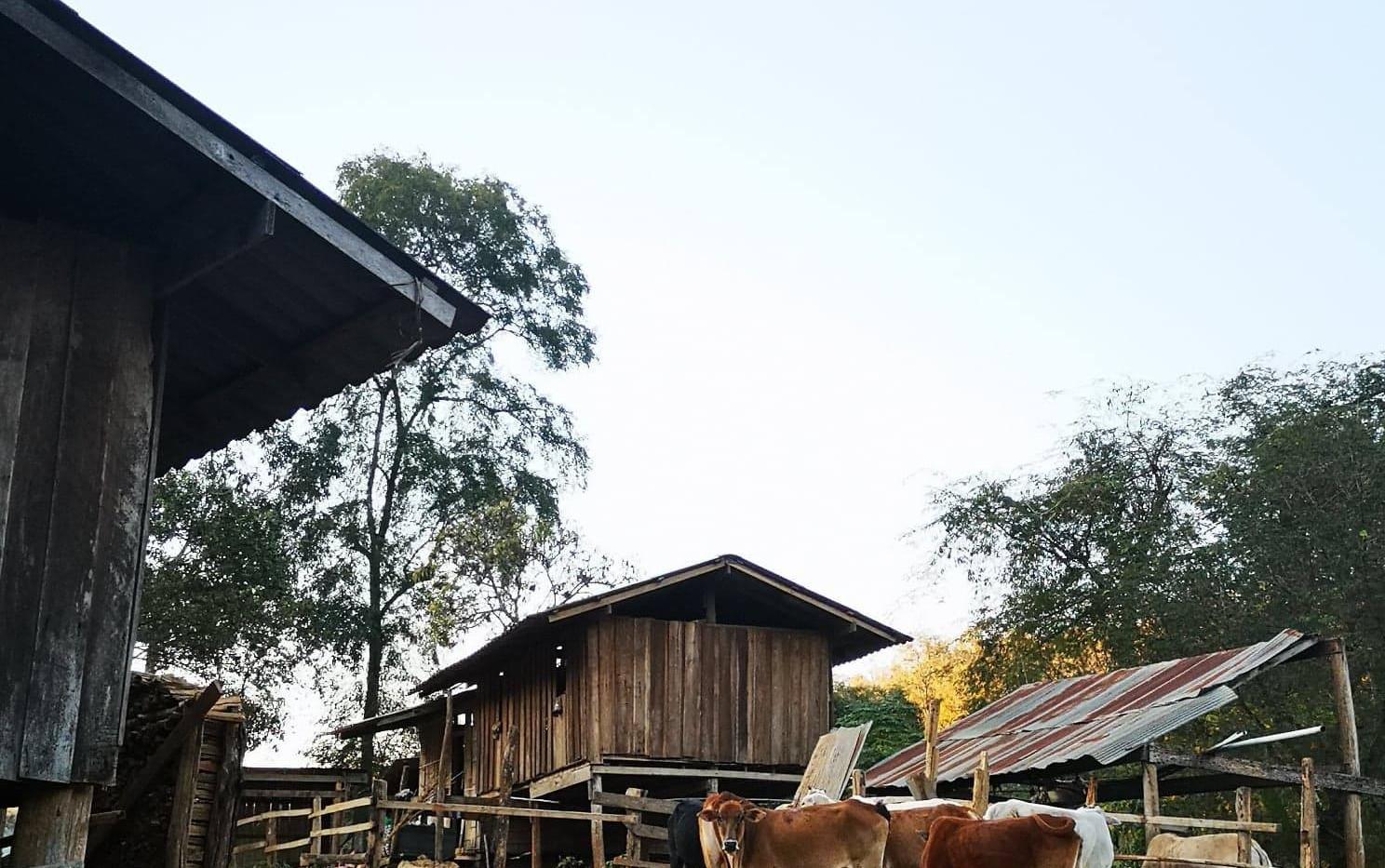 Village Lahu dans le nord de la Thaïland