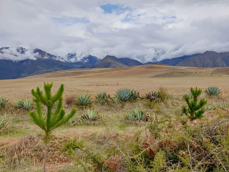 Sur la route pour les Salineras de Maras