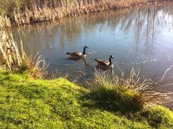 wildlife ponds in spring.jpg