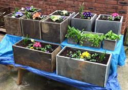 Planters Mixed