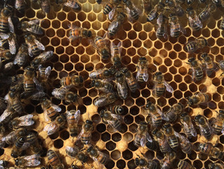 Our Bee Keeping Journal Part 2 – Setting up our own hives.