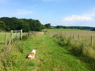 Dog Friendly Days Out In North Wales